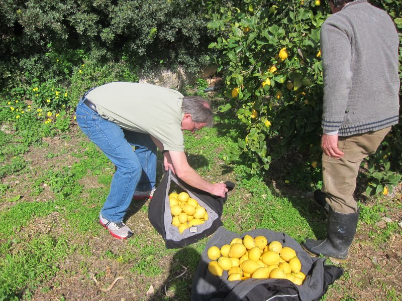 Picking lemons with Giannis