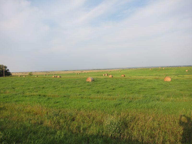 Prairie Landscape 2
