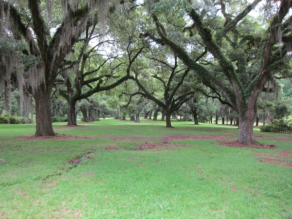 Plantation grounds